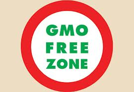 gmo altered food